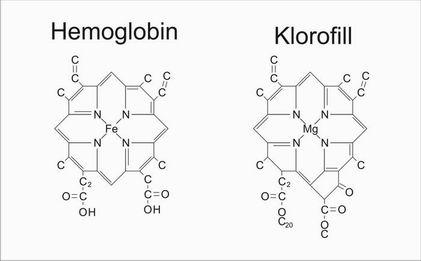 r_chlorophyll